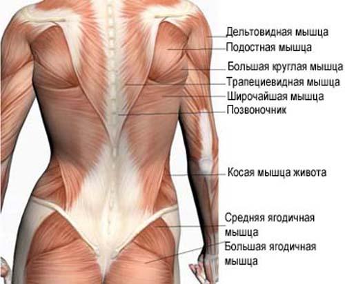 миозита спины симптомы