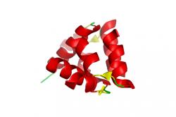 Выработка гормона релаксина - причина болей в спине