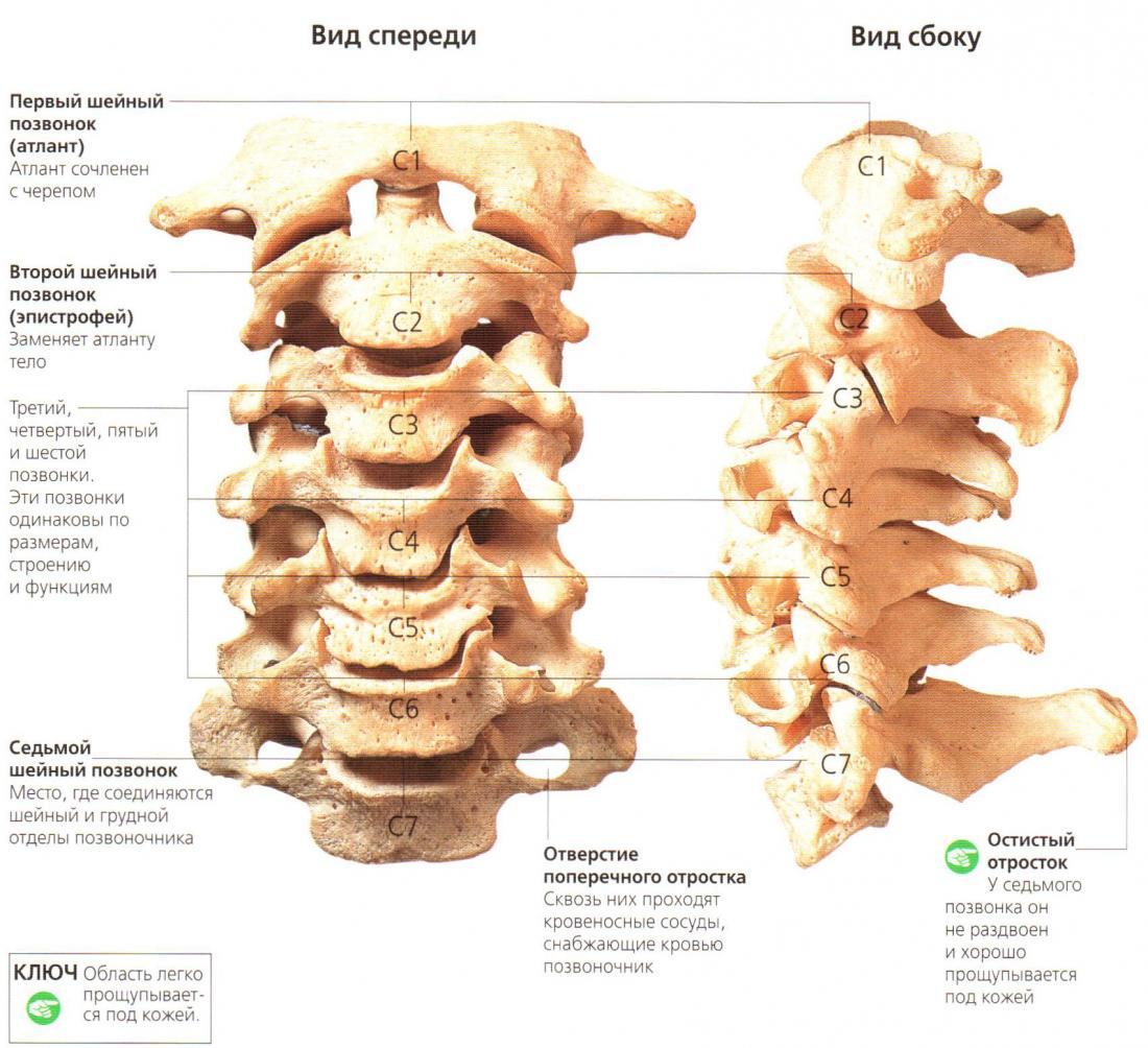 Основные симптомы подвывиха шейного позвонка