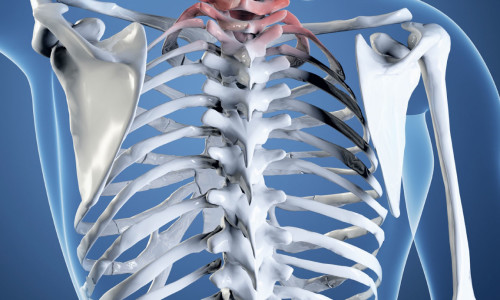 Рентген при проблемах позвоночника