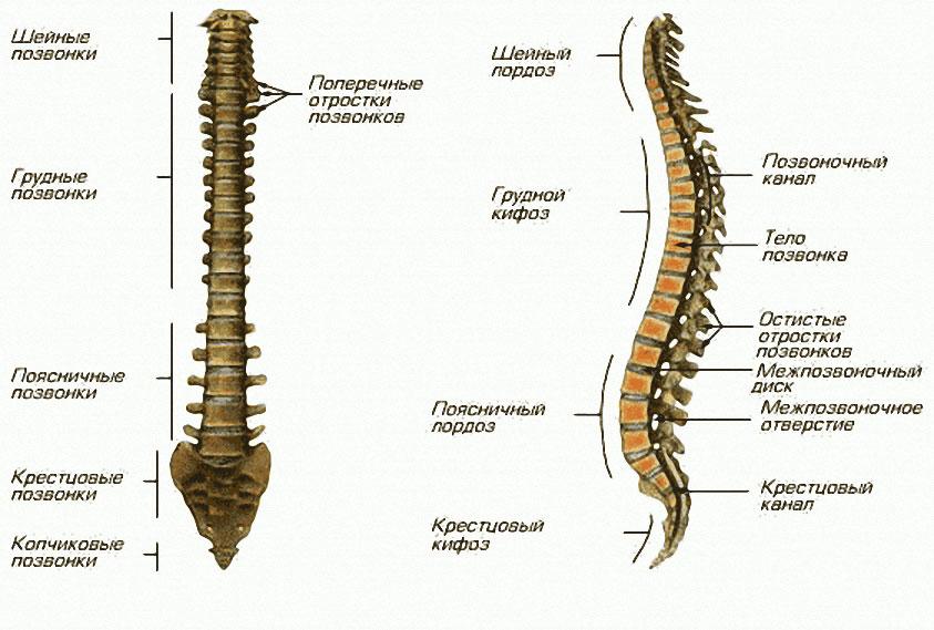 Обезболивающие таблетки от боли в спине при грыже